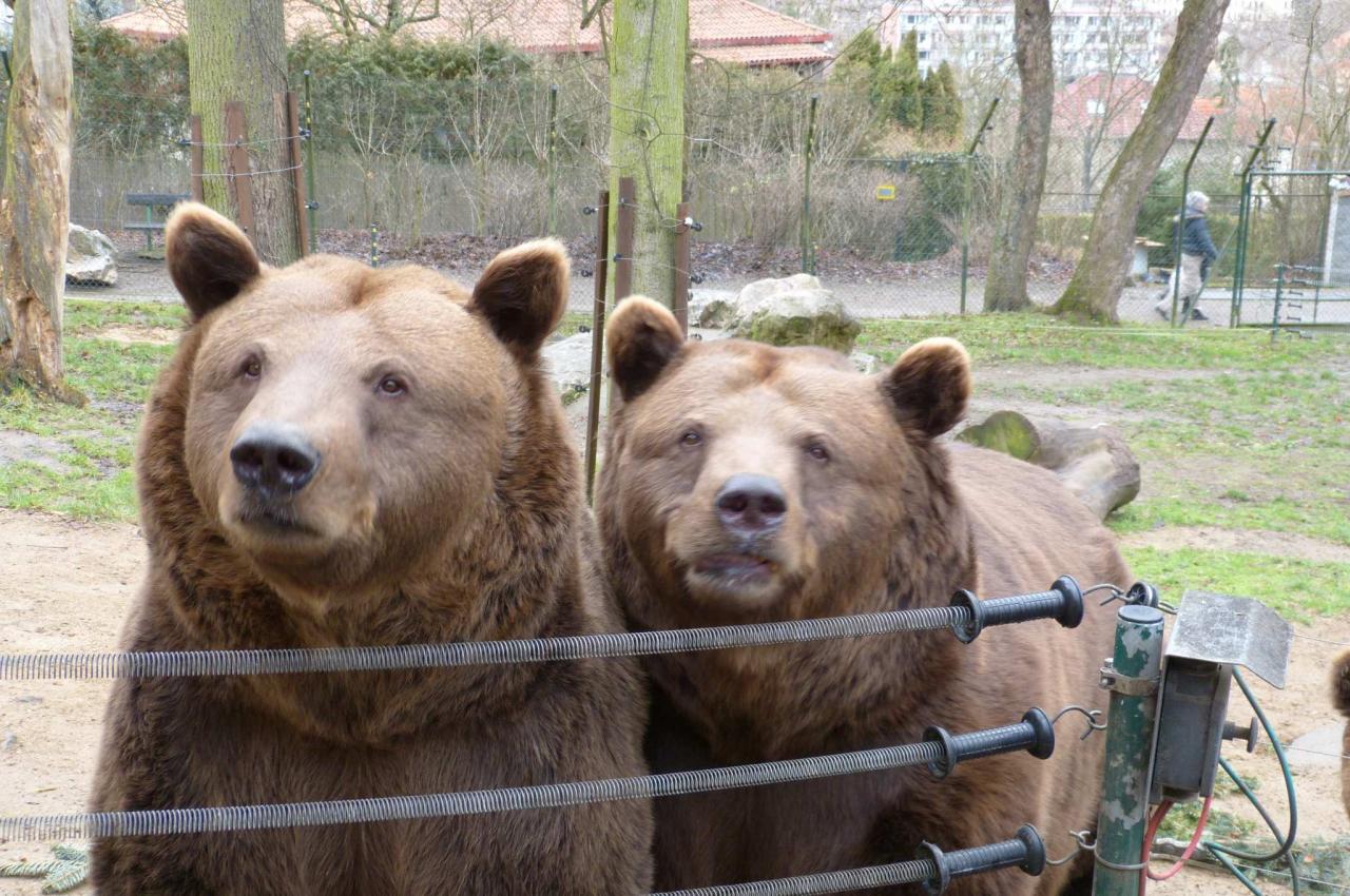 Přijďte oslavit medvědí narozeniny 1